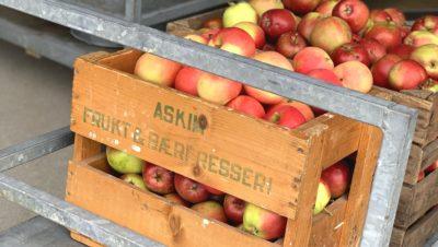 Epler pa traller i mottaket