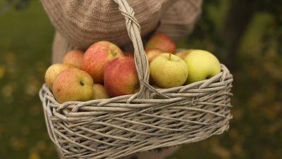 Kurv med epler