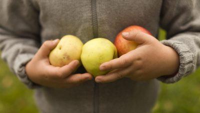 Epler i barnehender