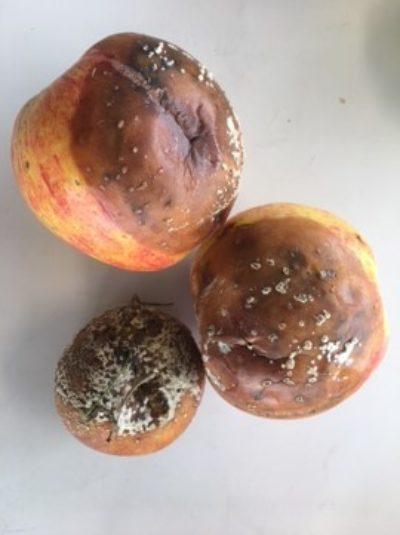 Epler med mugg og rate