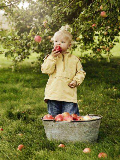 Barn plukker og spiser eple