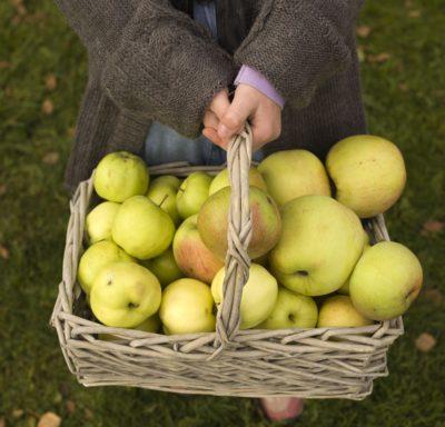 Epler i kurv holdt av liten jente