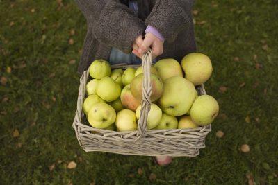 Jente holder kurv med epler