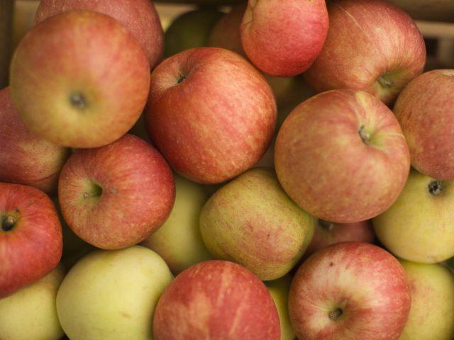 Epler i kasse
