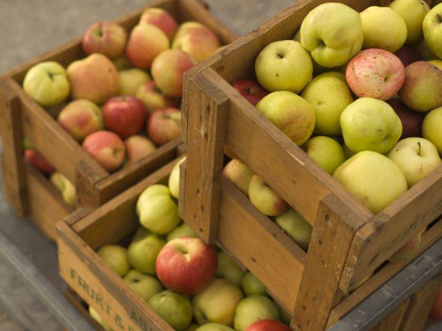 Fulle eplekasser på stablet på tralle