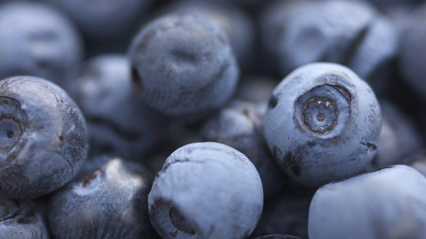 Nærbilde blåbær